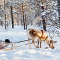 15 cheap Lapland holiday tricks
