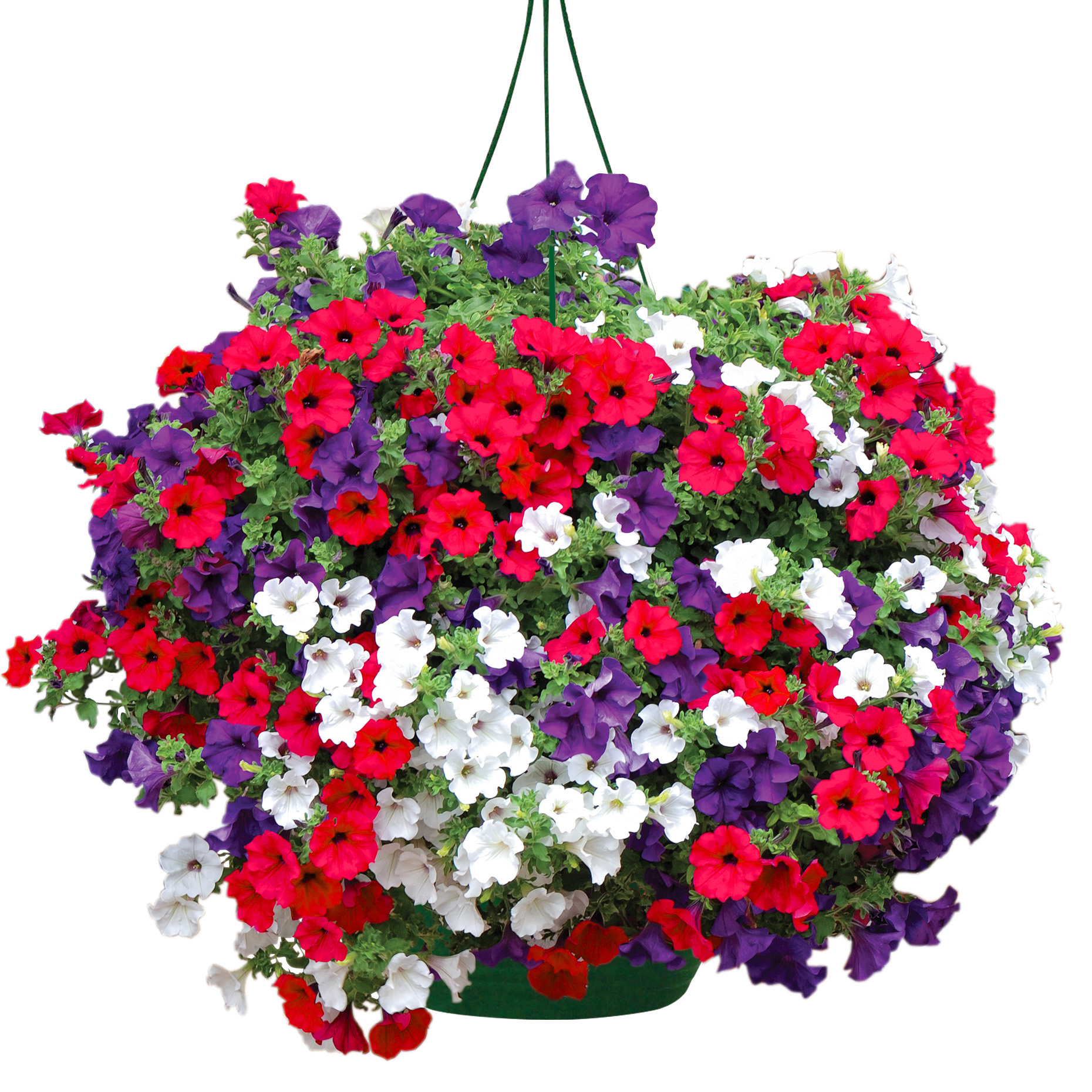Flowers For Baskets For Hanging : Jersey plants direct voucher codes discount deals