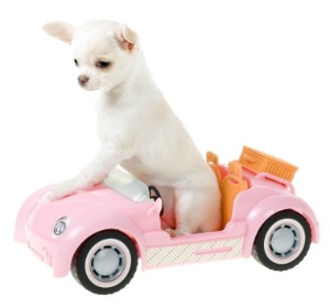 A puppy in a toy car