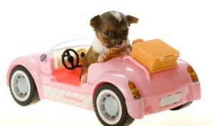 Picture of puppy in car