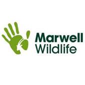 Marwell Wildlife Park